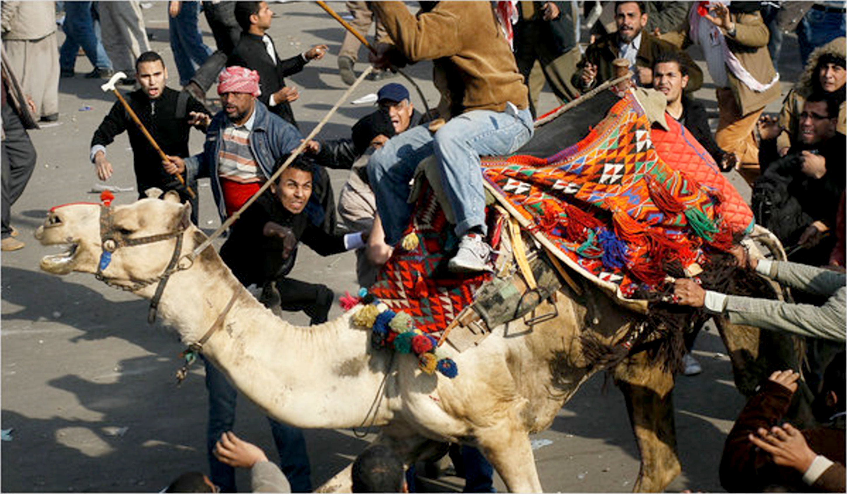 Egyptian Revolution Battle of the Camel