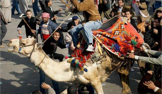 Egyptian Revolution Battle of the Camel